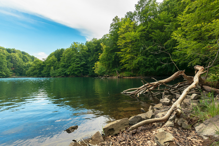 Photo for lake among primeval beech forest. morske oko located in vihorlat mountains. beautiful nature of slovakia. summer adventure concept - Royalty Free Image