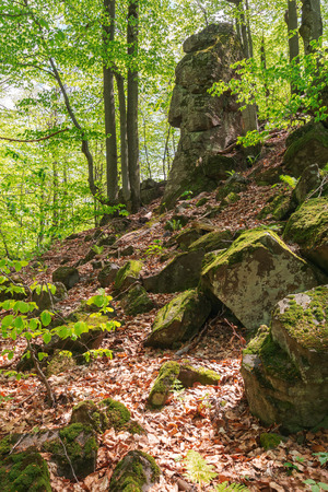 Photo for huge mossy cliff in the forest. beautiful nature scenery in spring. wild beech forest - Royalty Free Image