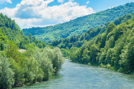 Photo pour forest river in mountains. forested hill and shores. beautiful summer scenery at sunny high noon. fluffy cloud on the blue sky - image libre de droit