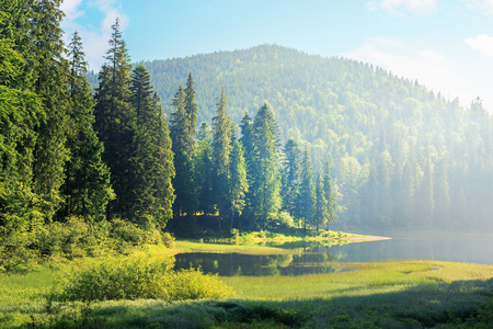 Photo pour amazing landscape with mountain lake among forest. beautiful summer scenery in the morning. coniferous trees on the grassy shore. hazy and sunny weather with blue sky - image libre de droit