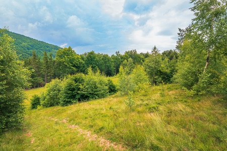 Photo for summer scenery on a cloudy day in mountains. meadow on hillside near the forest. mixed beech, spruce and birch forest. path down the hill. overcast sky. - Royalty Free Image