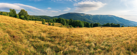 Photo for panorama of beech forest in mountains. meadows in weathered grass. range of ridges in the distance. wonderful carpathian summer countryside. fine weather in august. - Royalty Free Image