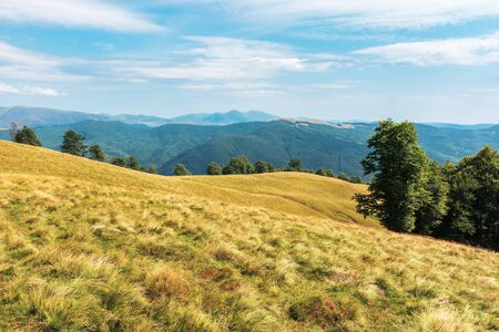 Photo for wonderful mountain landscape in late summer. alpine meadow with weathered grass. beech forest at the edge of a hill. sunny afternoon weather with fluffy clouds on the sky - Royalty Free Image