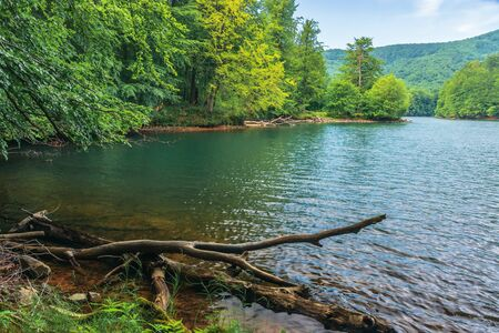Photo for lake among the beech forest. beautiful summer scenery in vihorlat mountains, slovakia. wonderful destination for a weekend vacation - Royalty Free Image