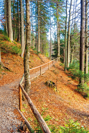 Photo for footpath through autumn forest in late autumn. wooden fence along the edge. beautiful nature background of october - Royalty Free Image