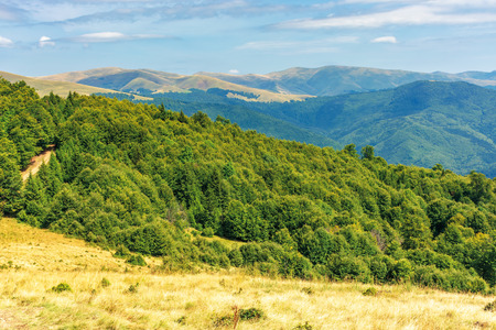 Photo for primeval beech forests of carpathian mountains. beautiful late summer landscape in afternoon. svydovets ridge in the distance. weathered grass on hills and meadows - Royalty Free Image