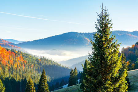 Photo for wonderful autumn sunrise in mountains. fog floating in the distant valley. hills with spruce and beech forest. beautiful sunny weather - Royalty Free Image