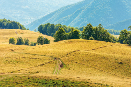 Photo for beautiful countryside landscape in late summer. dirt road downhill through meadow. beautiful area on the slope among beech forest. wonderful scenery on august afternoon - Royalty Free Image