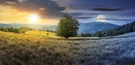 Photo for day and night time change concept above the beech tree on the meadow in mountains. landscape with sun and moon. wonderful summer scenery of carpathian countryside. mountain ridge in the distance. - Royalty Free Image