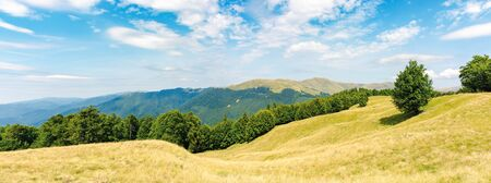 Photo for one tree on the meadow in high mountain panorama. beech forest around the hill. ridge in the distance. sunny afternoon weather in summer. location in the ukrainian Carpathians, svydovets range - Royalty Free Image