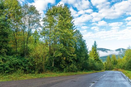 Photo for old country road through spruce forest. beautiful transportation morning scenery. fluffy clouds on the azure sky. cracked asphalt and gravel roadside. fog rising above the distant mountain - Royalty Free Image