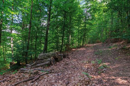 Photo for path through primeval beech forest. beautiful summer scenery. abandoned old logs among the fallen foliage - Royalty Free Image