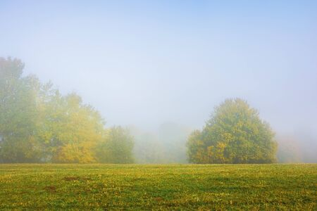 Photo for trees on the grassy meadow on a foggy morning. wonderful early autumn scenery. beautiful nature background - Royalty Free Image