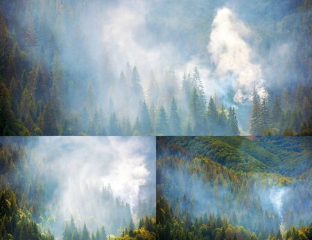 Photo for smoke in the woods. disaster on a dry autumn weather. collage of images - Royalty Free Image