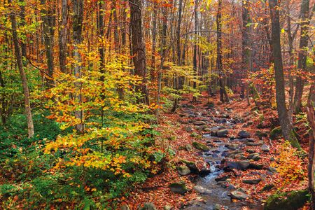 Photo for water stream among the rocks in the forest. great autumnal scenery. colorful foliage on the trees. hazy weather on a sunny day - Royalty Free Image