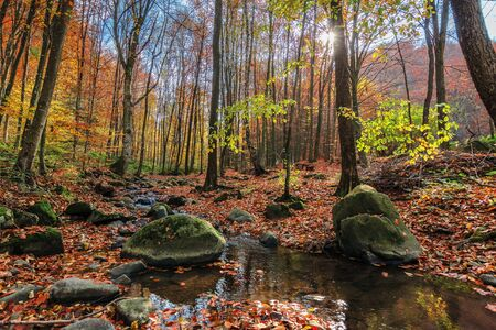 Photo for water stream among the rock in forest. beautiful nature scenery on a sunny autumn afternoon. crystal clear brook with some floating leaves. trees in colorful fall foliage. mossy boulders on the shore - Royalty Free Image