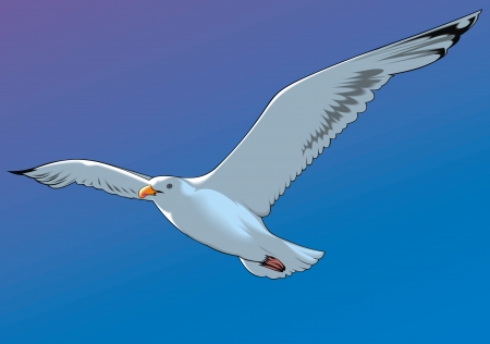 Illustration pour nice flying seagull and blue clear sky - image libre de droit