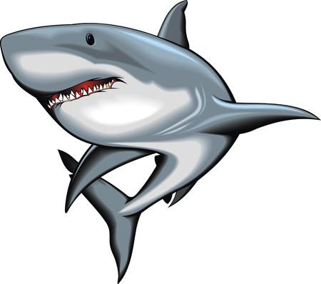 Ilustración de nice shark isolated on the white background - Imagen libre de derechos