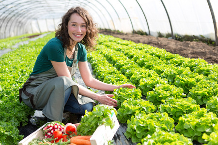 Foto für View of an Young attractive woman harvesting vegetable in a greenhouse - Lizenzfreies Bild
