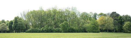 Photo for View of a High definition Treeline isolated on a white background - Royalty Free Image