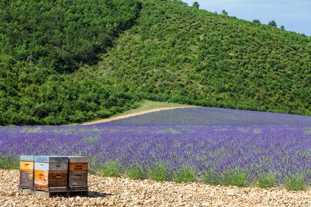 Beehive dedicated to lavander honey production.