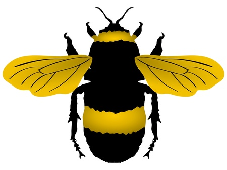 A colored illustration of insect serie. Bumblebee