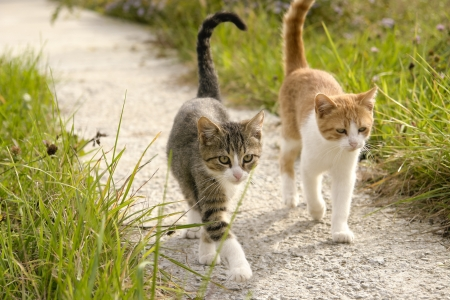 Foto de Two kittens going for a walk together in the garden - Imagen libre de derechos