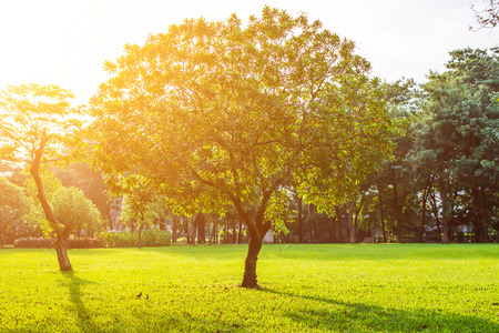 Photo for Trees in Lumpini park, Bangkok, Thailand - Royalty Free Image