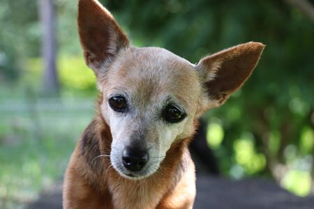 Photo pour dog cute looking camera - image libre de droit
