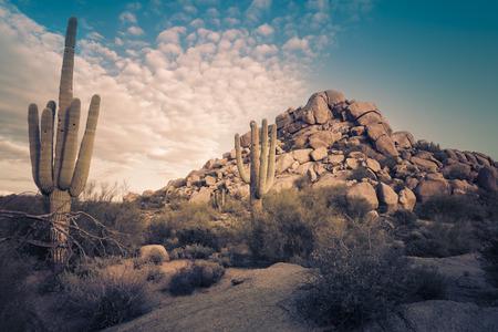 Foto de Desert landscape in Scottsdale, Phoenix, Arizona area - Image cross processed - Imagen libre de derechos