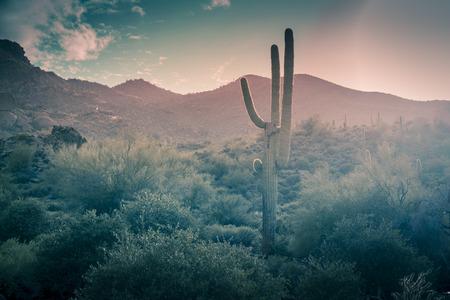 Photo for Desert landscape rare rainfall Scottsdale,Arizona,USA - Royalty Free Image