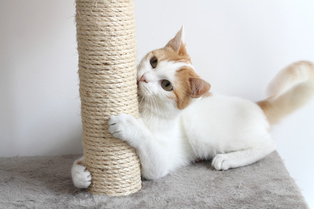 Photo pour Red and white cat and scratching post - image libre de droit