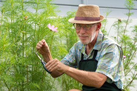 Photo pour Portrait of handsome senior man gardening - image libre de droit