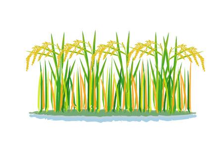 Ilustración de rice plant vector design - Imagen libre de derechos