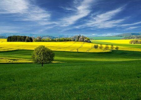 Foto für rapeseed field landscape. Rapeseed field. Landscape - Lizenzfreies Bild