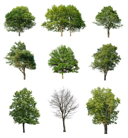 Photo for Trees isolated on white  - Royalty Free Image