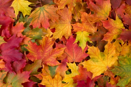 Photo pour Fall leaves background - image libre de droit