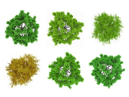 Foto de Tree tops isolated - Imagen libre de derechos