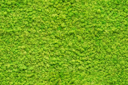 Photo for seamless close up green moss texture - Royalty Free Image