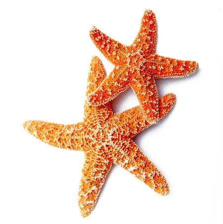 Photo pour two starfish on white background - image libre de droit