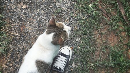 Selfie of cat with shoes