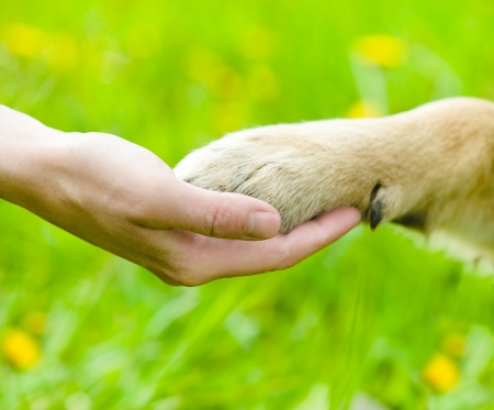Photo for Friendship between human and dog - shaking hand and paw - Royalty Free Image