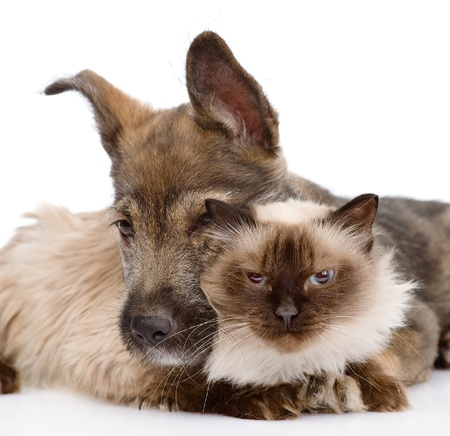 dog embraces a cat   isolated on white background