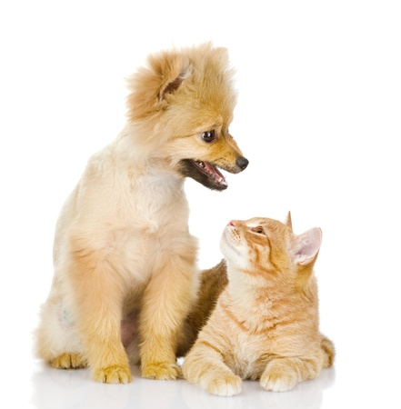 the dog and cat look at each other  isolated on white background
