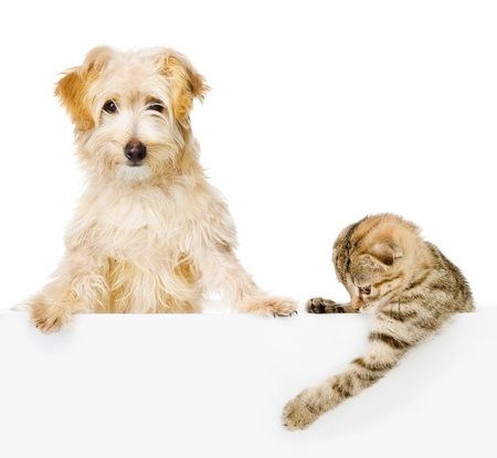 Cat and Dog above white banner looking at camera  isolated on white background
