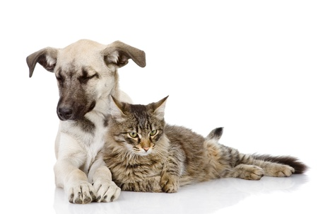 the cat and dog lie together  Isolated on a white background