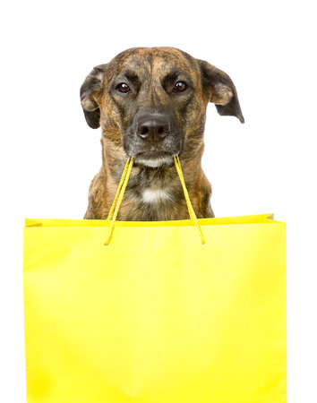 funny dog with shopping bag  isolated on white background