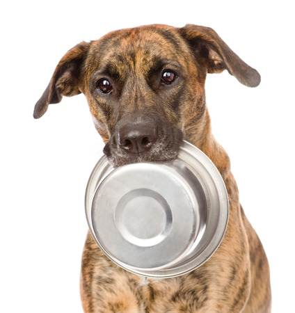 Photo pour dog  holding bowl in mouth  isolated on white background - image libre de droit