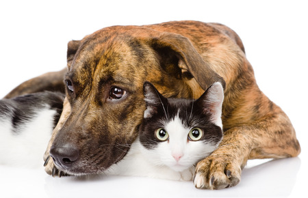 Sad dog and cat together  isolated on white background
