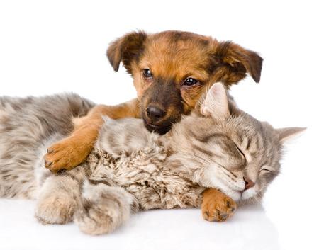 Dog and cat sleeping  isolated on white background